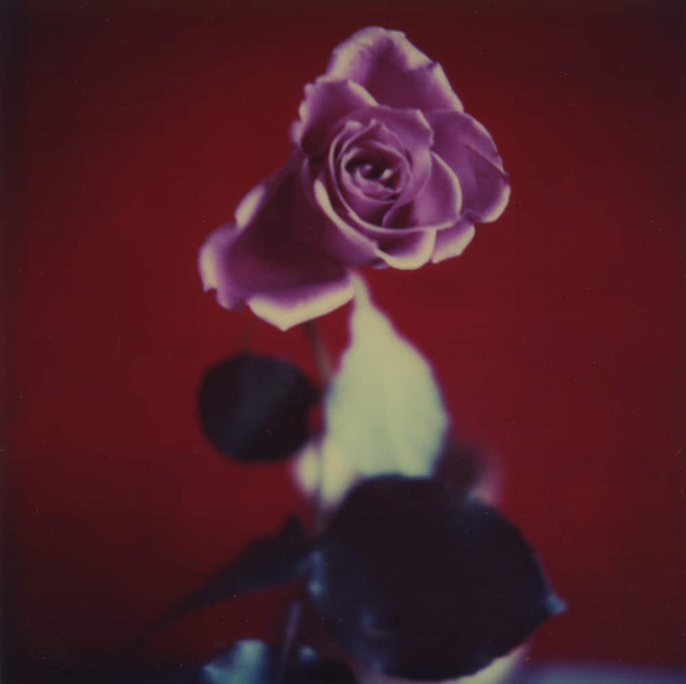 Bud- a Polaroid SX-70 by Harold Joe Waldrum