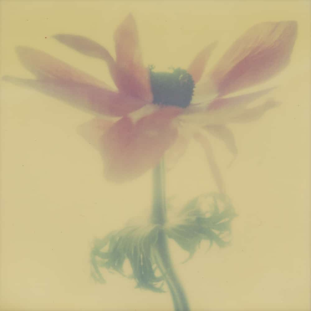 Blown - a Polaroid SX-70 by Harold Joe Waldrum