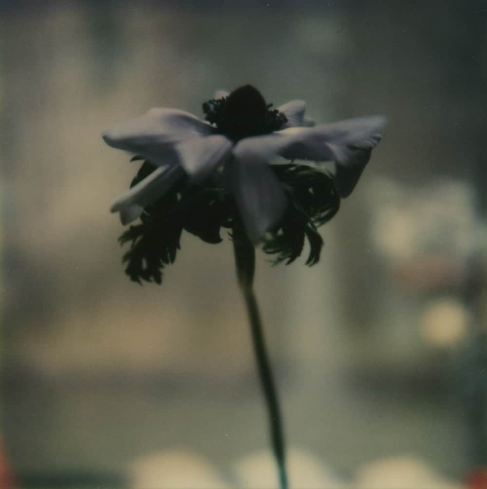 Monochrome NYC - a Polaroid SX-70 by Harold Joe Waldrum