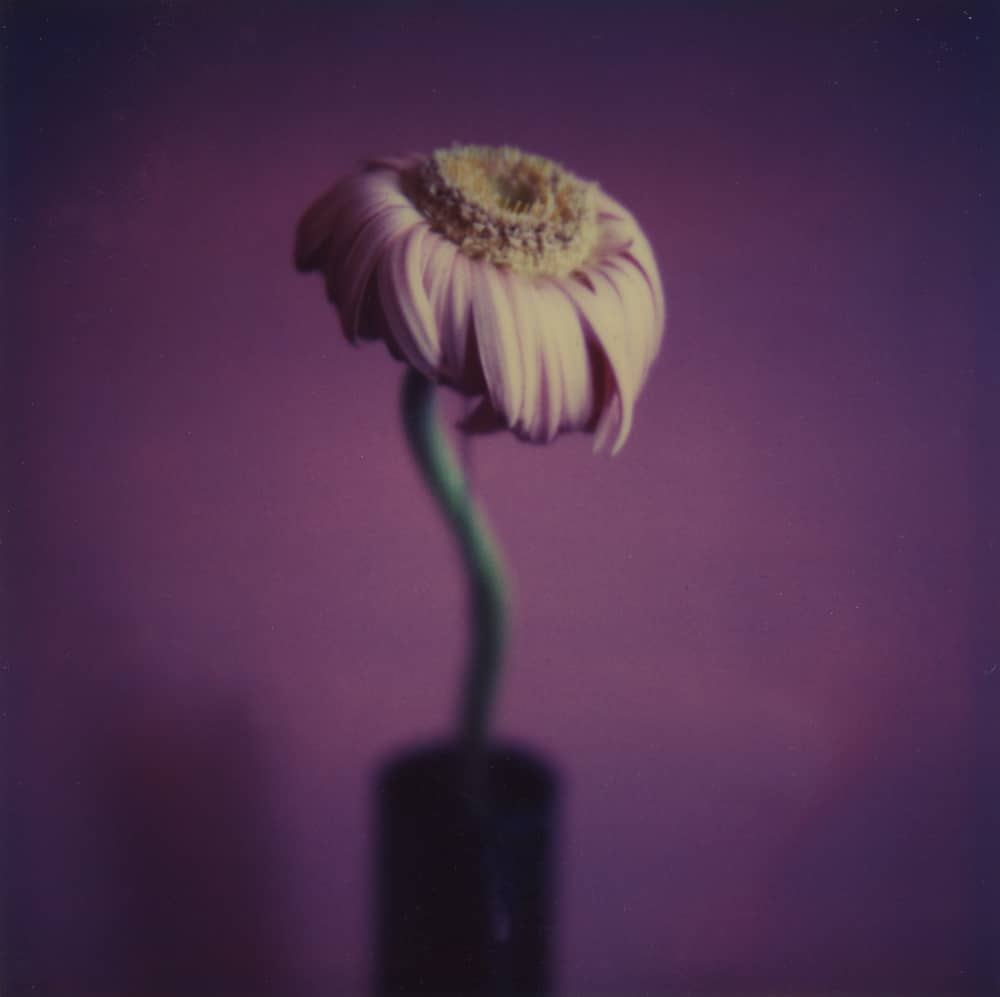 Wilted - a Polaroid SX-70 by Harold Joe Waldrum