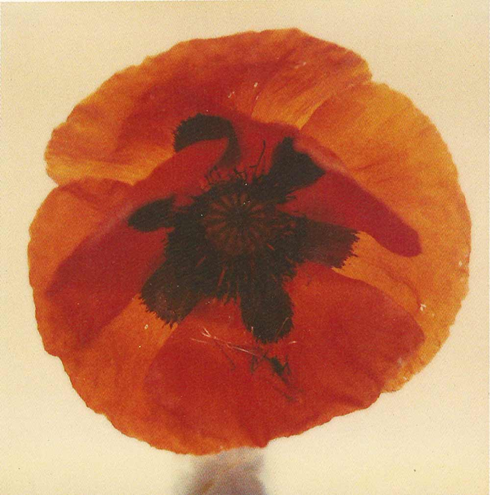 Poppy, an SX-70 polaroid by Harold Joe Waldrum