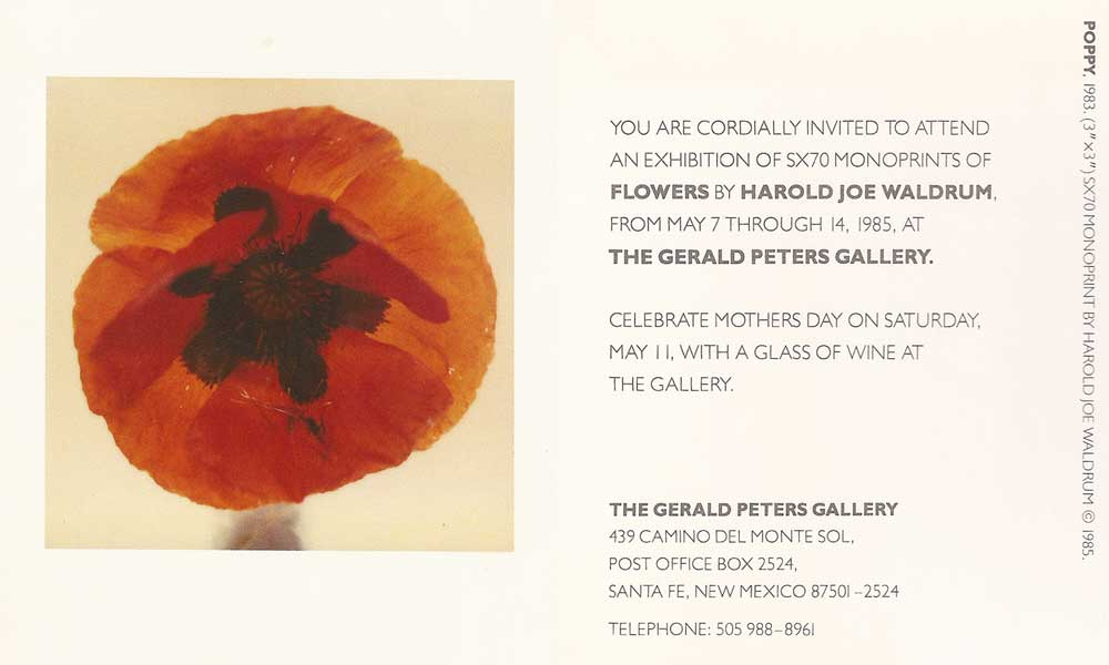 Waldrum show of flower polaroids at Gerald Peters Gallery